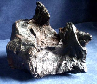 Chunk ~ Irish Bog Oak ~ Ancient Petrified Wood photo