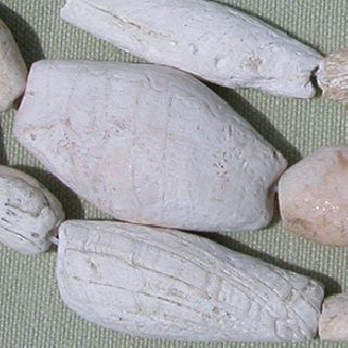 A 29.  5 Inch 75cm Strand Of Large Ancient Neolithic Shell Beads Mali 27 photo