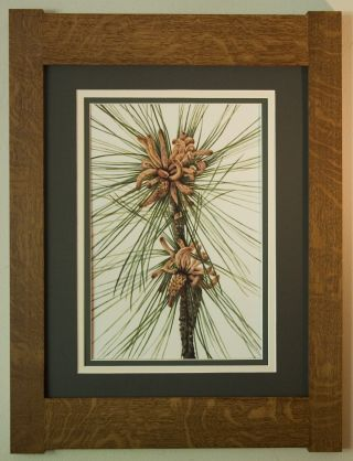 Mission Style Bungalow Quartersawn Oak Arts & Crafts Framed Print - Loblolly Pine photo