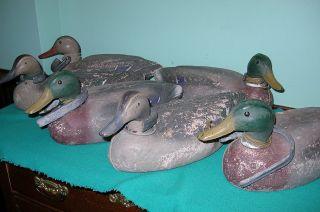 6 Vintage Duck Decoys Molded Foam Herters Duck Decoys Drake & Hens photo