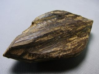 Southeast Asian (vietnam) Agarwood (natural Smell) photo