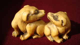 Lovely Old Japanese Ox - Bone Netsuke - Two Dogs Friends photo