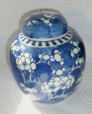 Antique Qing Dynasty Chinese Porcelain Blue & White Prunus Ginger Jar + Lid photo