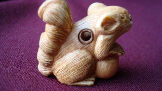 Lovely Old Japanese Ox - Bone Netsuke - Squorrel Holding A Nut photo