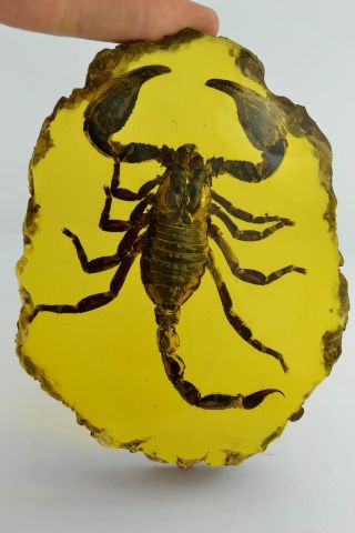 Asian Old Collectibles Decorated Wonderful Handwork Amber Scorpion Statue Aaaaa photo