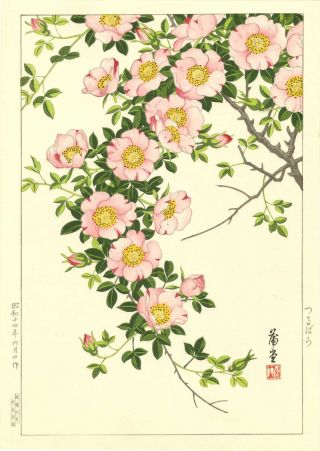 Nishimura Hodo Japanese Woodblock Print Cherry Blossom photo