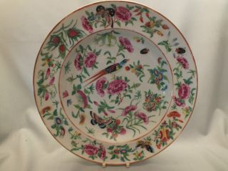 Chinese Porcelain Plate Painted With Flowers,  Birds & Insects 19thc (a) photo