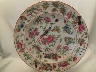 Chinese Porcelain Plate Painted With Flowers,  Birds & Insects 19thc (b) photo