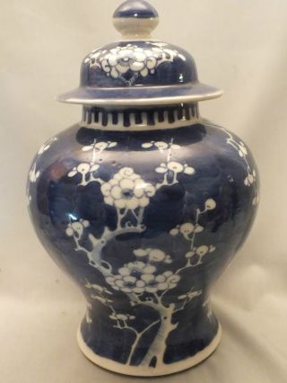 Chinese Porcelain Jar & Cover Painted With Prunus In Underglaze Blue 19thc photo
