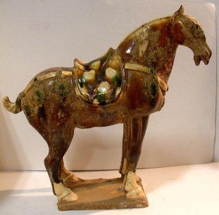 Tang Horses 10