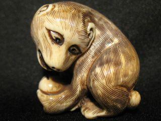 Antique Japanese 象牙 Ox Bone Netsuke Monkey W.  A Ball,  Signed,  Amazing Details photo