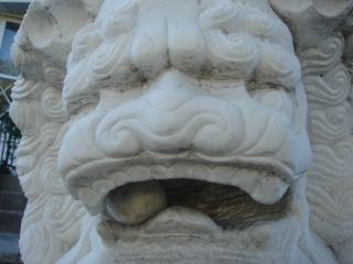 Architectural Garden Chinese Guardian Lion Carved Marble Foo Dogs photo