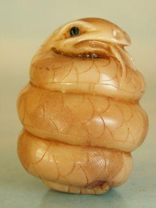 Coiled Snake - Netsuke Ukn855 photo