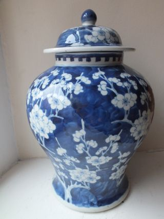 19th C Chinese Porcelain Blue And White Prunus Baluster Vase And Cover photo