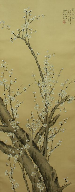 Jiku869 Jr China Scroll Plum Tree photo