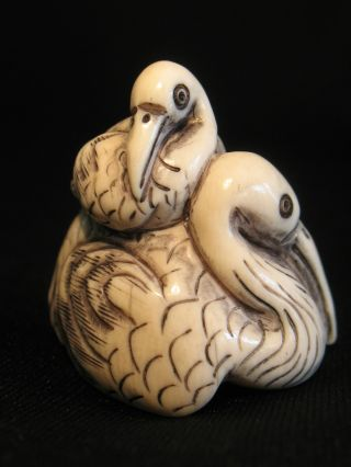 Finely Carved & Inked Ox Bone Netsuke Of Two Pelican Birds photo