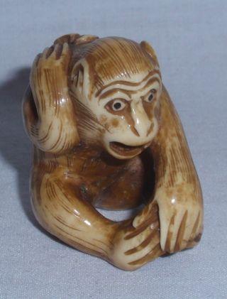 Antique Oxbone Netsuke Scorpion On Monkey ' S Back photo