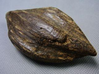 Southeast Asian (vietnam) Agarwood (natural Smell) photo