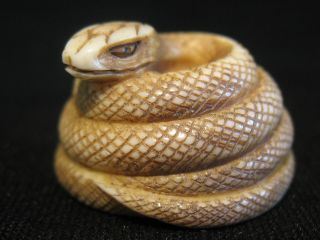 Antique Japanese Ox Bone Netsuke Figure Snake Signed,  Good Condition photo