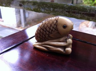 Old Ox Bone Carving Carved Oxbone Japanese Nestuke Japan Fish 19e Poisson photo