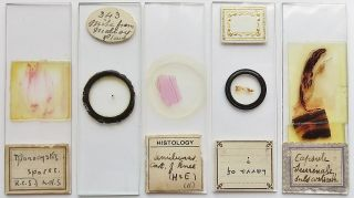 5 Antique/vintage Microscope Slides (2) photo