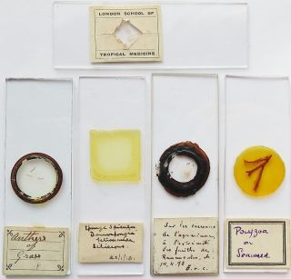 5 Antique/vintage Microscope Slides (25) photo