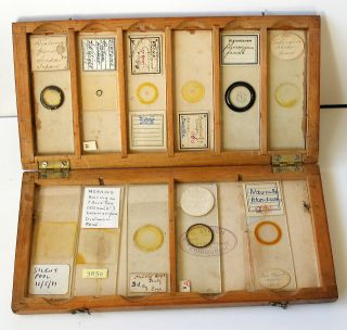 Boxed Collection (11) Early Diatom Microscope Slides photo