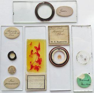 5 Antique/vintage Microscope Slides (24) photo