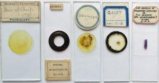 5 Antique/vintage Microscope Slides (27) photo