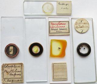 5 Antique/vintage Microscope Slides (28) photo