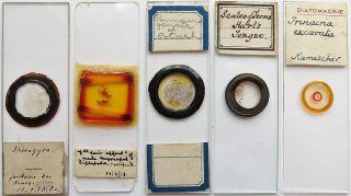 5 Antique/vintage Microscope Slides (5) photo