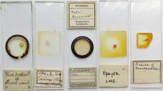 5 Antique/vintage Microscope Slides (9) photo