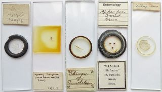 5 Antique/vintage Microscope Slides (11) photo