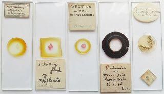 5 Antique/vintage Microscope Slides (22) photo