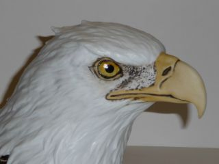 American Eagle Fine Porcelain Bust photo