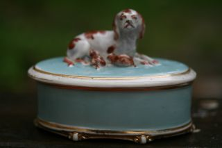 19th C.  Porcelain Trinket Box With Recumbent Dog & Puppies To Lid photo