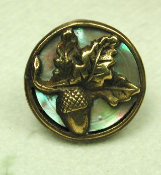 Antique Button Brass Acorn & Oak Leaf On Iridescent Shell Back photo