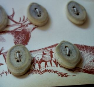 Vintage Card Of Seven Stag Horn Buttons photo