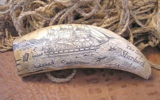 Replica Sperm Whale Tooth Scrimshaw