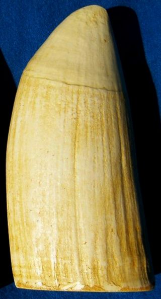 Faux Ivory Whale Tooth Scrimshaw,  Engraving 6 photo