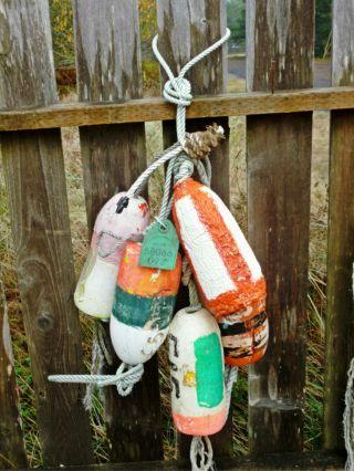 5 Beachcombed Crab Pot Floats Net Float Bouy Crayfish Shrimp Lobster Buoy 65 photo
