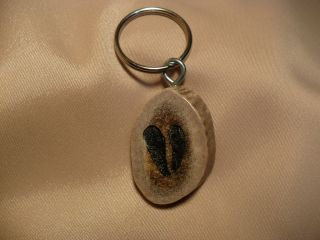 Scrimshaw Deer Antler Keyring Deer Print photo
