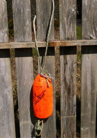 Beachcombed Authentic Crab Float Buoy Bouy Fish Net Lobster Shrimp Fishing 1.  70 photo