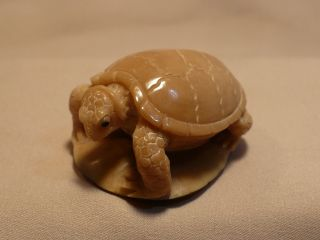 Scrimshaw Carved Tagua Nut Turtle photo