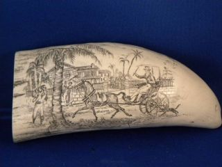 Scrimshaw Whale Tooth Replica