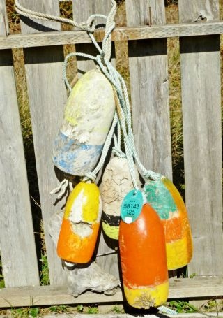 5 Beachcombed Crab Pot Floats Net Float Bouy Crayfish Shrimp Lobster Buoy 63 photo