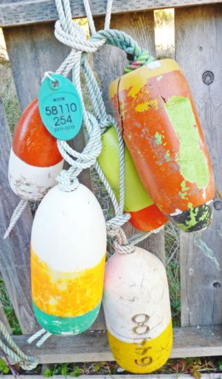 Authentic 5 Beachcombed Crab Floats Buoy Bouy Net Fishing Fish Shrimp Lobster 56 photo