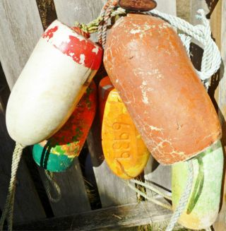 5 Beachcombed Crab Pot Floats Net Float Bouy Crayfish Shrimp Lobster Buoy 55 photo