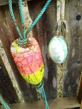 Beachcombed Authentic Crab Pot Float Buoy Bouy Lobster Fish Fishing Net Shrimp E photo