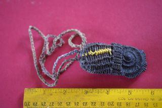 Rare Jurassic Nautilus Ammonite Fossil Dani Tribe Chief Pectoral Necklace Guinea photo